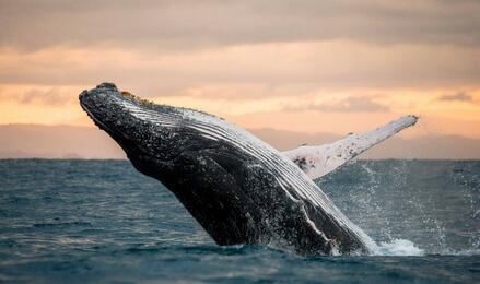 Boston whale watching | Go Boston Pass