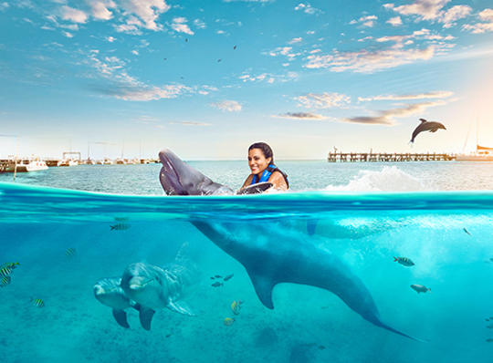Sea Life Royal Swim Plus at Isla Mujeres