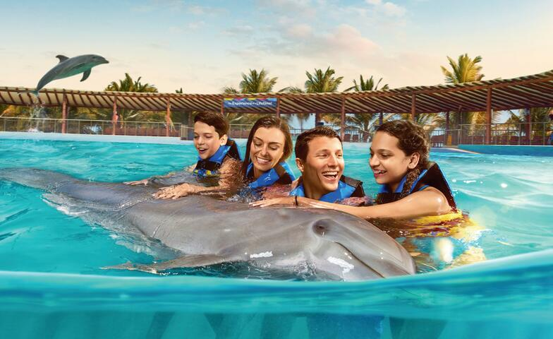 Dolphin Encounter with lunch and Maroma beach club access