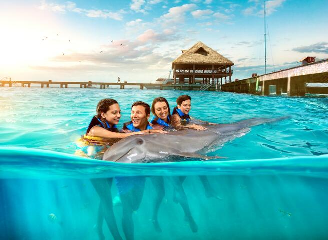 Sea Life Royal | Swimming with the dolphins | Go Cancun Pass
