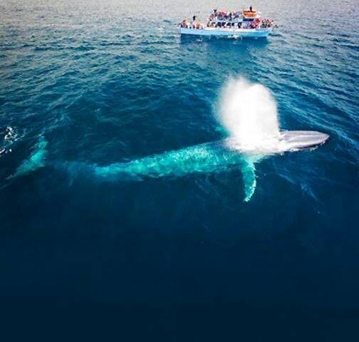 Whale Watching & Dolphin Cruises - Newport Landing