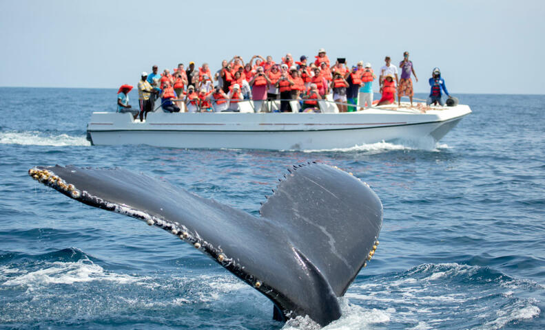Harbor Cruise or Whale Watch in Long Beach