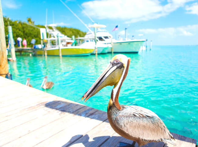 Gray Line Miami: Key West Day Trip | Go Miami Pass