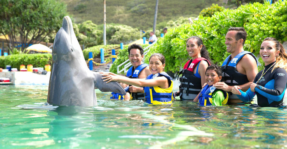 Dolphin Encounter by Sea Life Park  | Go Oahu Pass