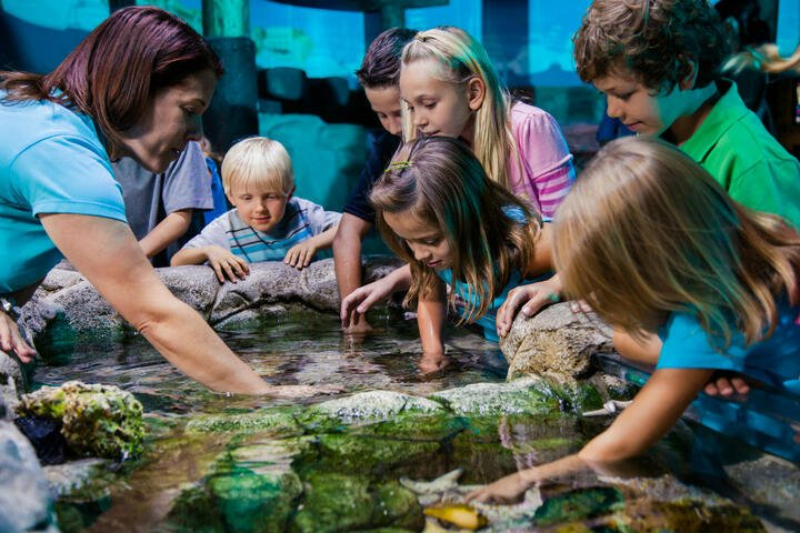 SEA LIFE Aquarium Orlando | Go Orlando Pass