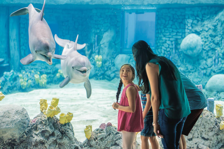 Seaworld | Go San Antonio Pass