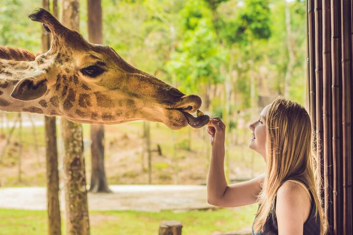 San Antonio Zoo Discounts Save Up To 45 Off