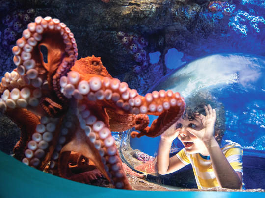 SeaWorld® San Diego Discounts tickets | Go San Diego Pass