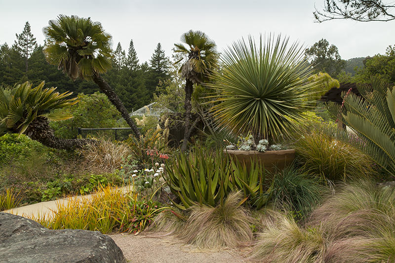 UC Berkeley Botanical Garden