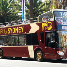 Hop-On Hop-Off Big Bus Sydney and Bondi: One-Day Classic Tour